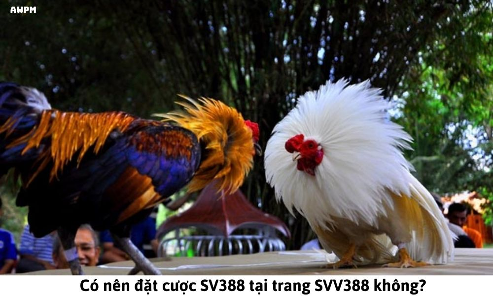 Có nên đặt cược SV388 tại trang SVV388 không?